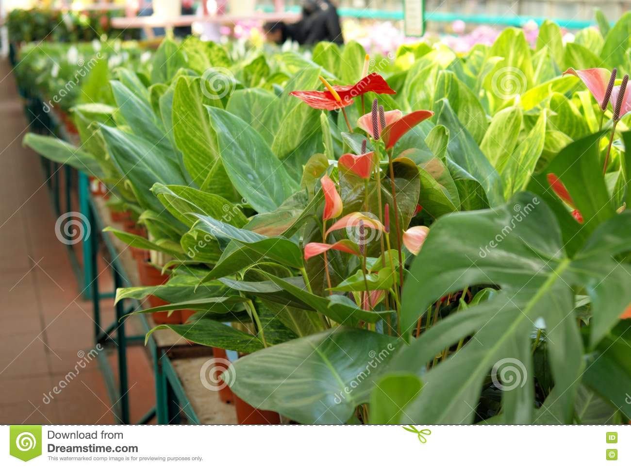 Flowers In Hothouse Stock graphy Image