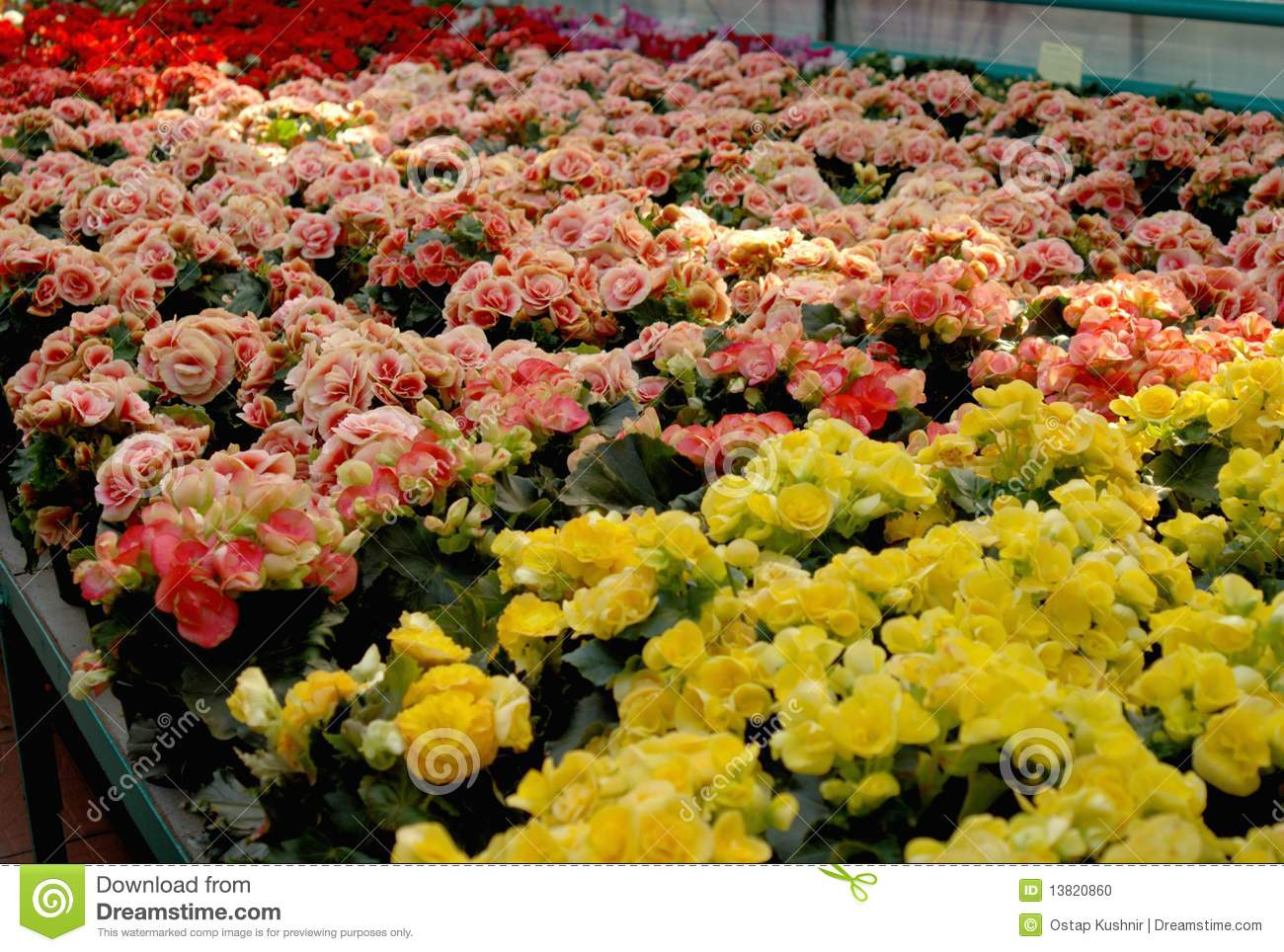 Flowers In Hothouse Stock Image