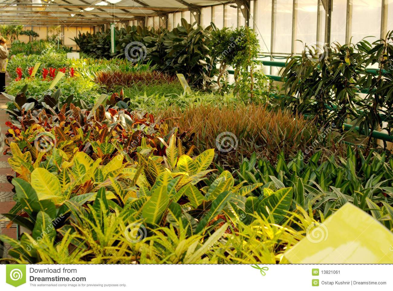 Flowers In Hothouse Stock Image Image