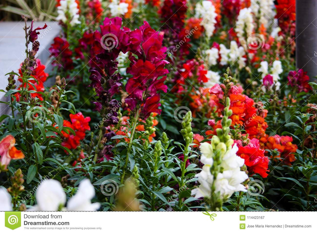 Flowers from Israel stock image. Image of floral, colorful - 114423167