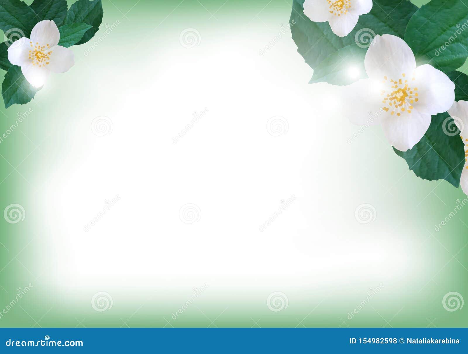 Flowers Jasmine Elegant Background For Greeting Card Or