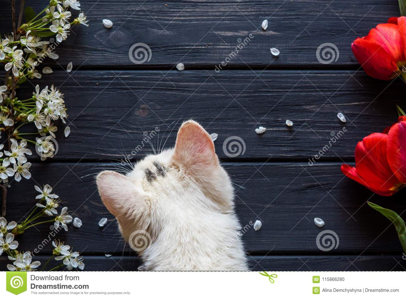 Flowers and kitten on a black wooden background