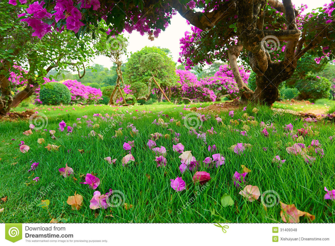 The Flowers On The Lawn Stock Photo Image Of Scenery
