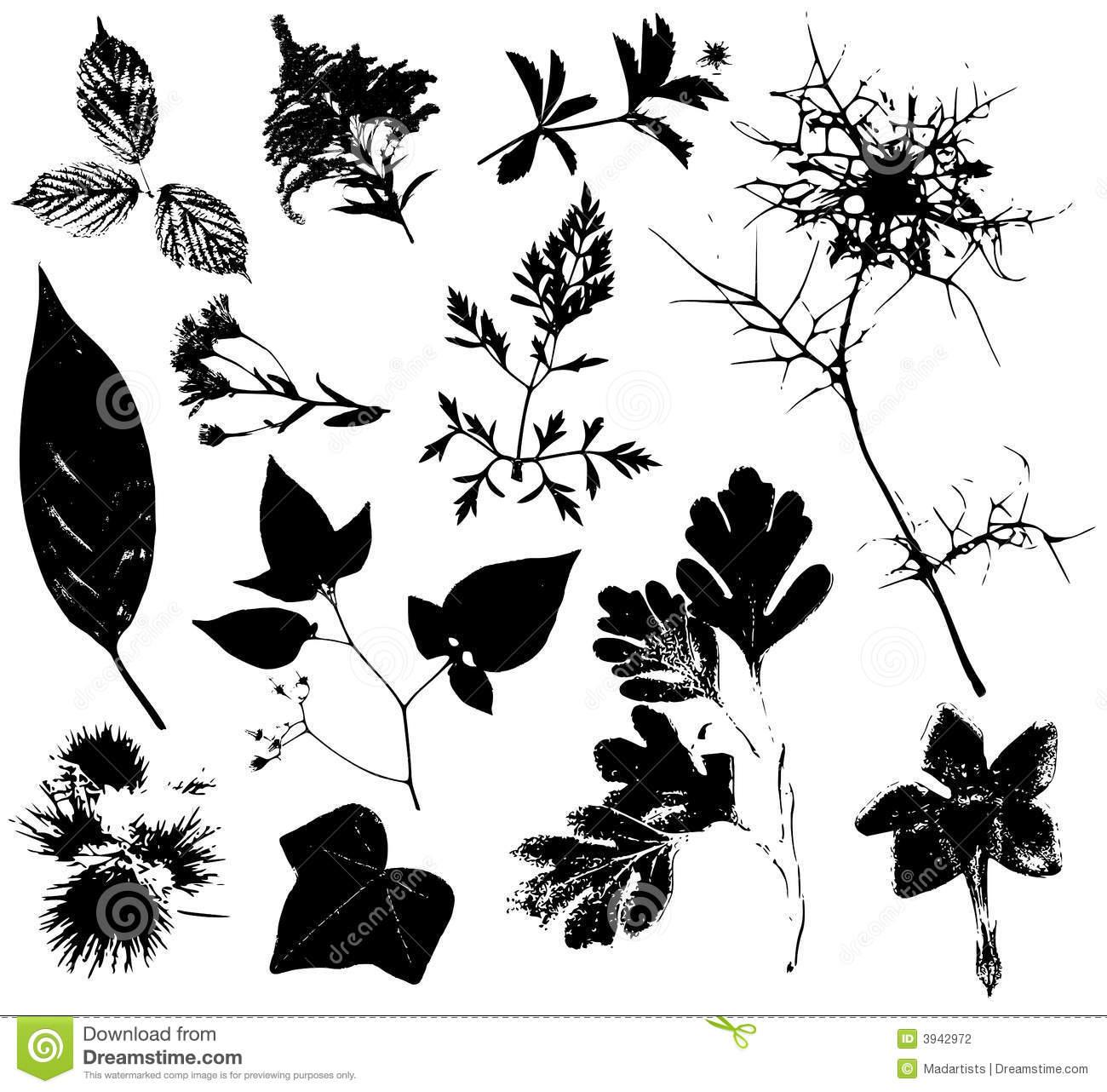 Flowers Leaves Vectors 3 Stock Photography Image 3942972