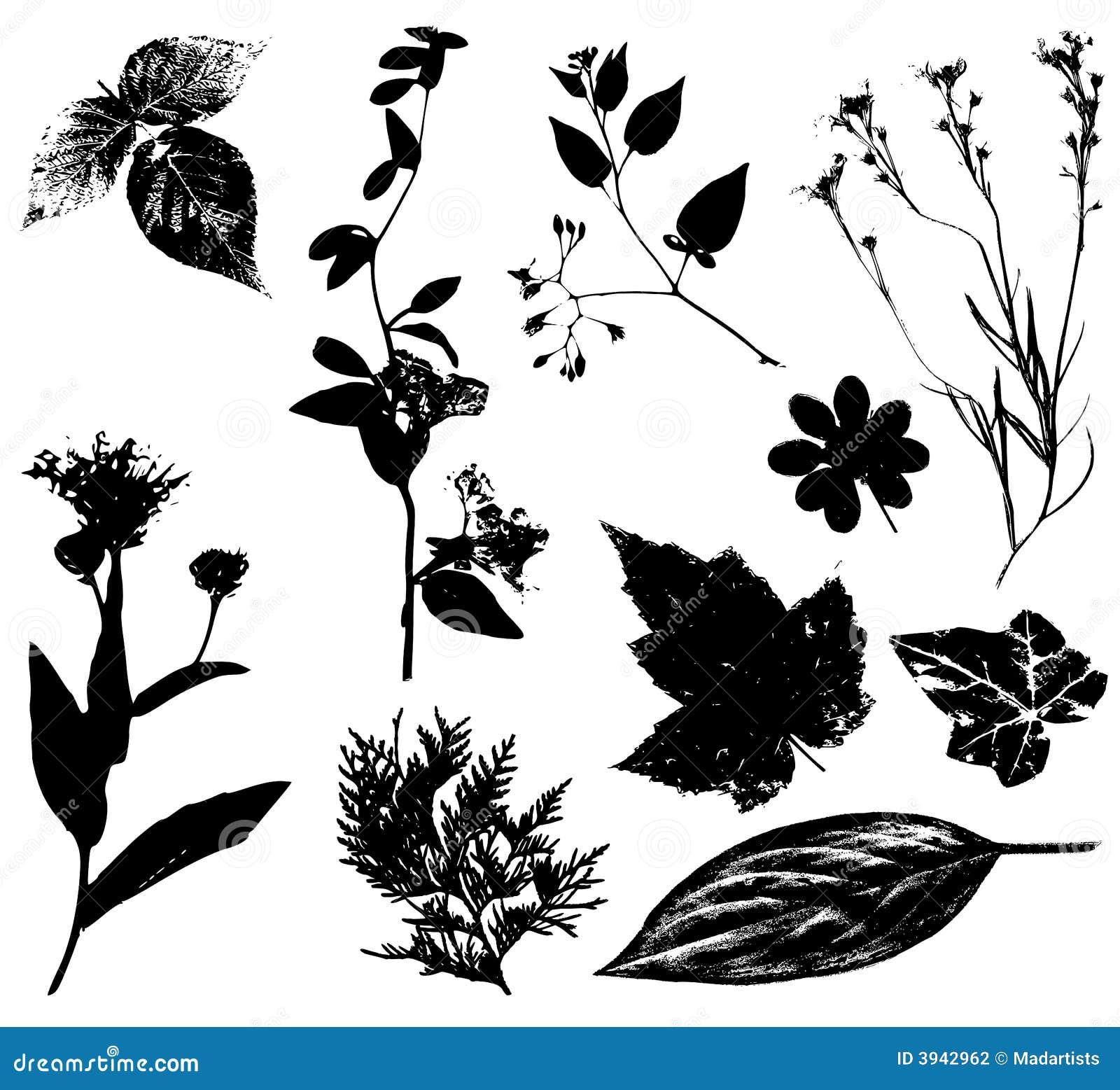 cherry flower clip art black white
