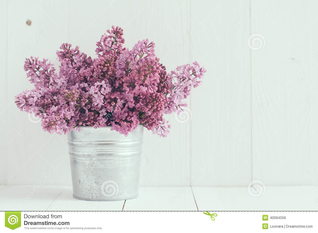 flowers of lilac stock photo image 40094556