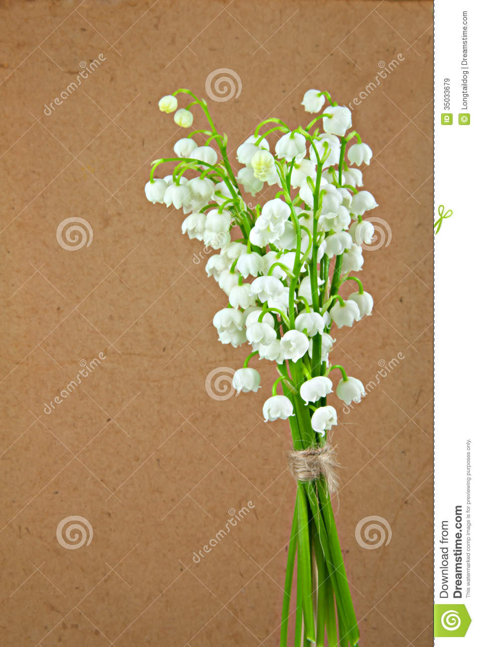 Flowers of lily of the valley stock image image of blossom valley flowers of lily of the valley izmirmasajfo