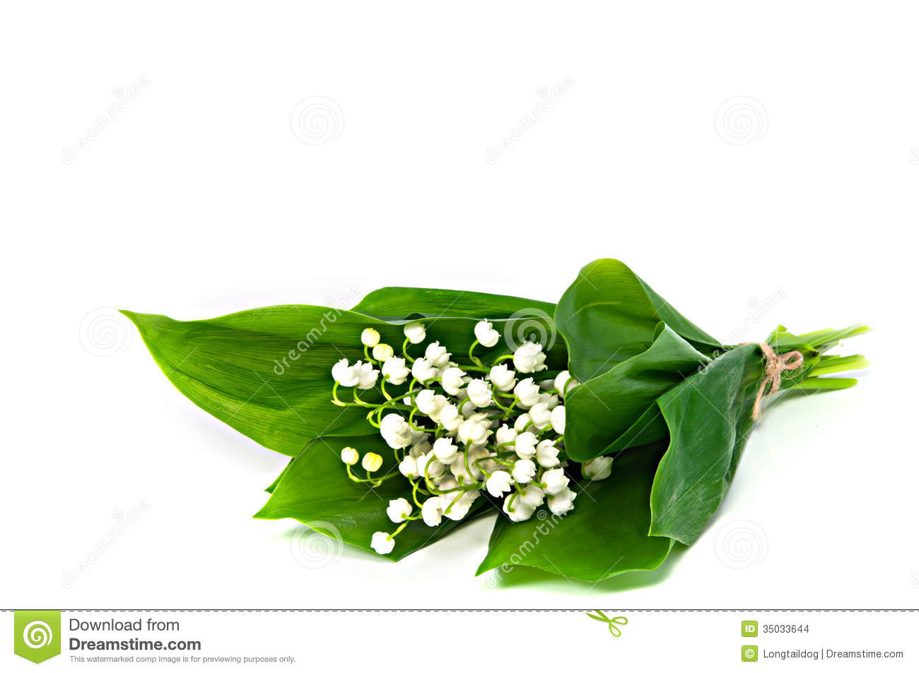 Flowers of lily of the valley stock photo image of plant flowers of lily of the valley stock photo image of plant beautiful 35033644 izmirmasajfo
