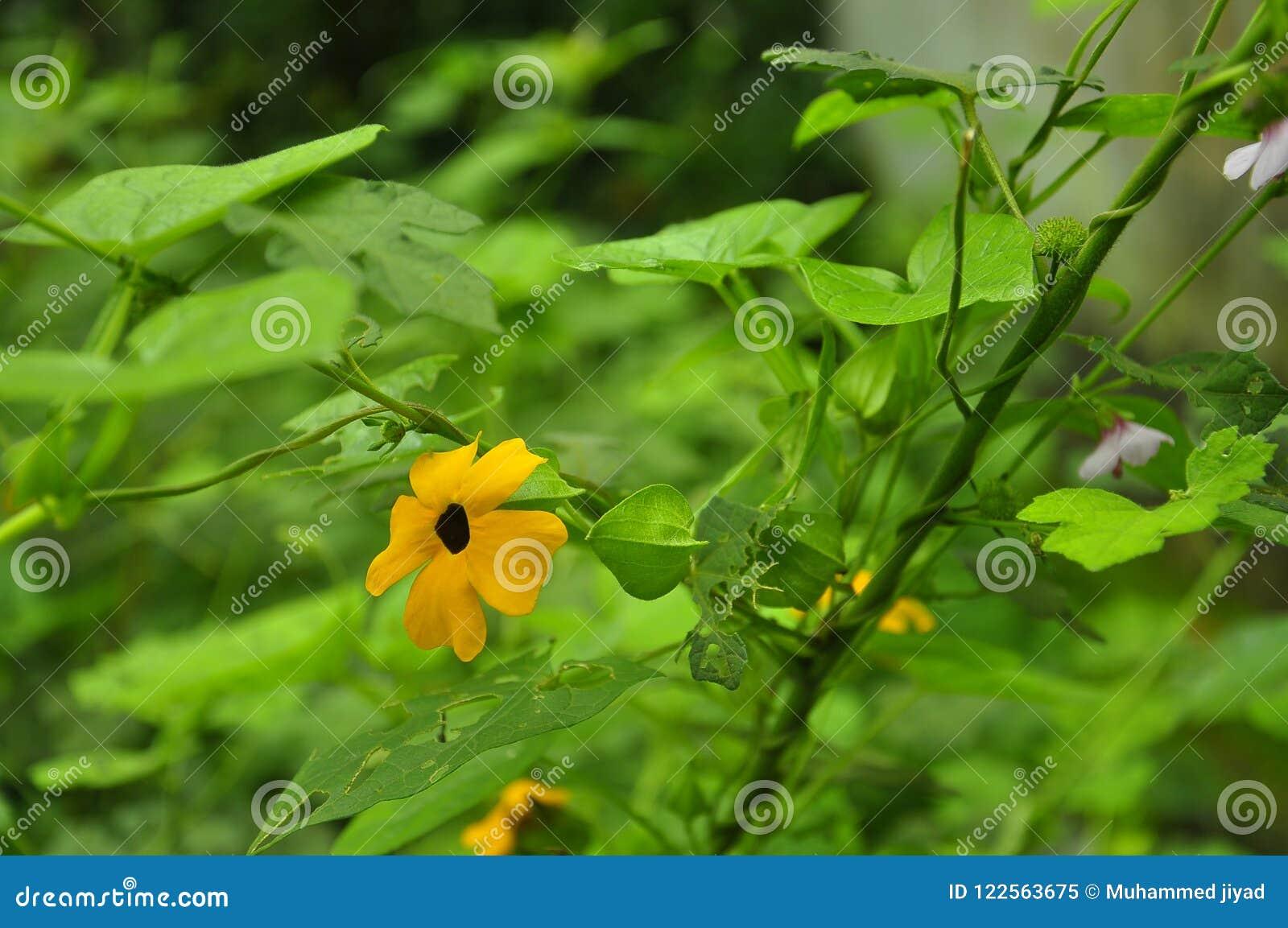 Flowers mallika