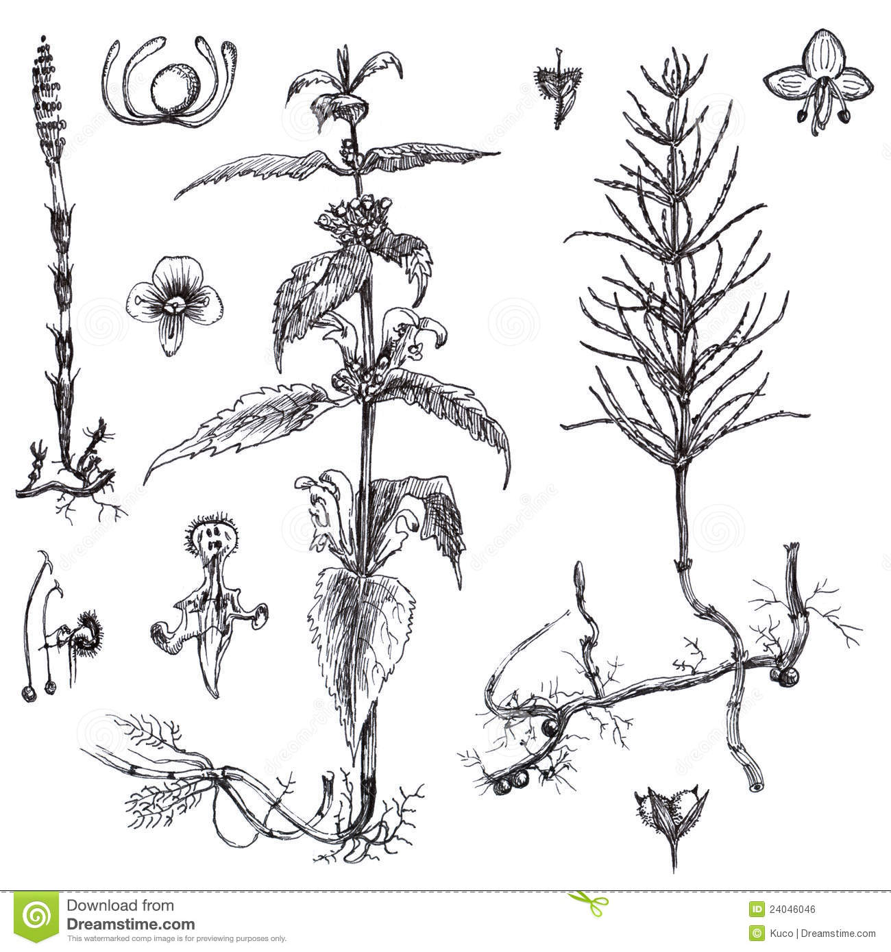 Flowers And Medicinal Herbs Royalty Free Stock Image