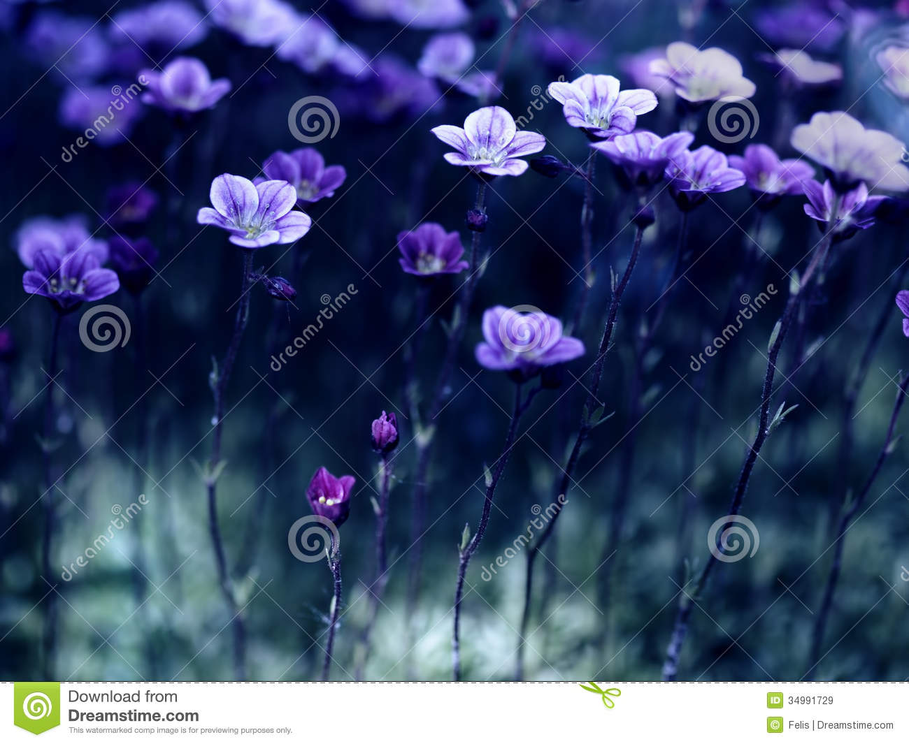 flowers in the moonlight royalty free stock images image 34991729