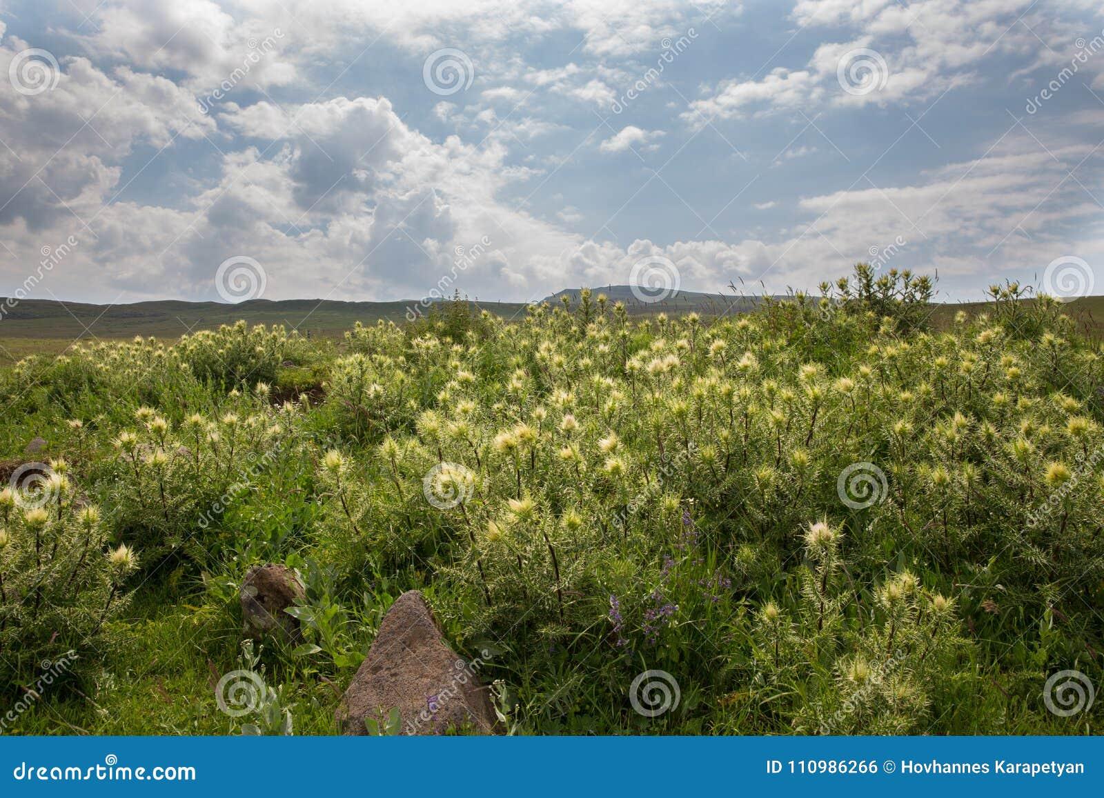 Flowers Mountain flowers wild flowers