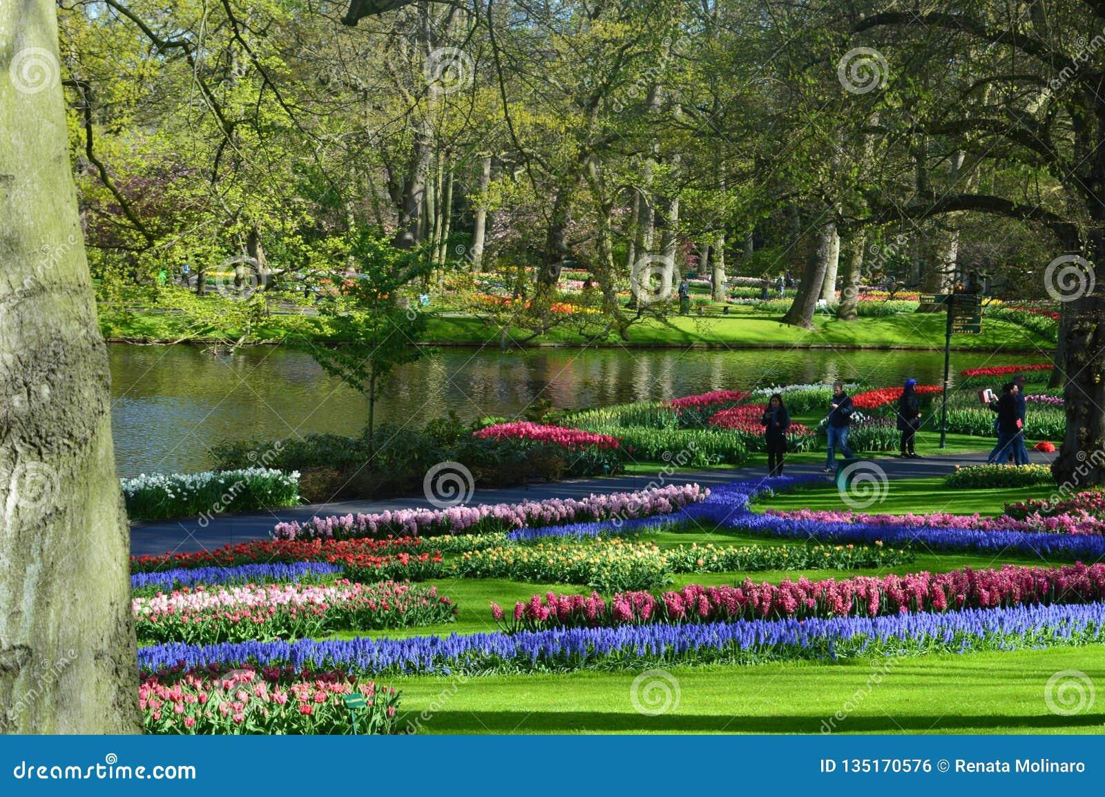 colorful garden at keukenhof park, near amsterdam editorial photo