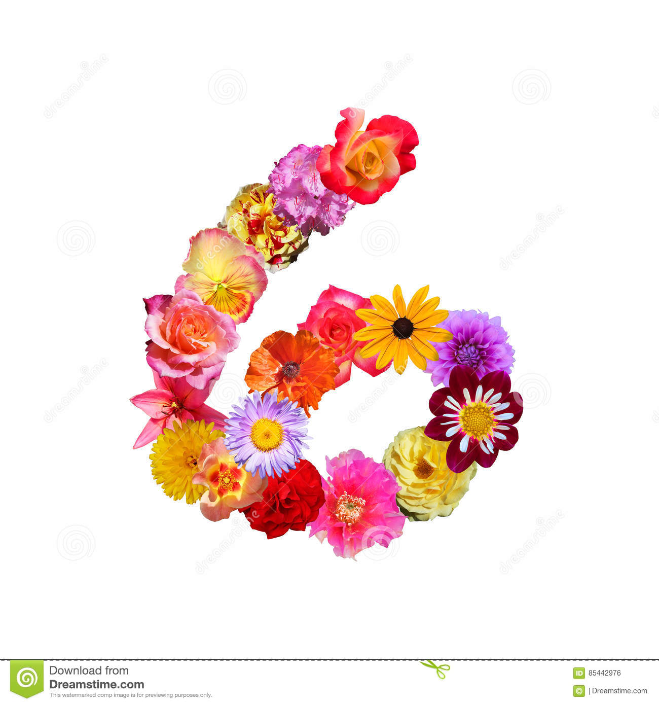 Flowers Number Six Stock Illustration  Illustration Of Lettering