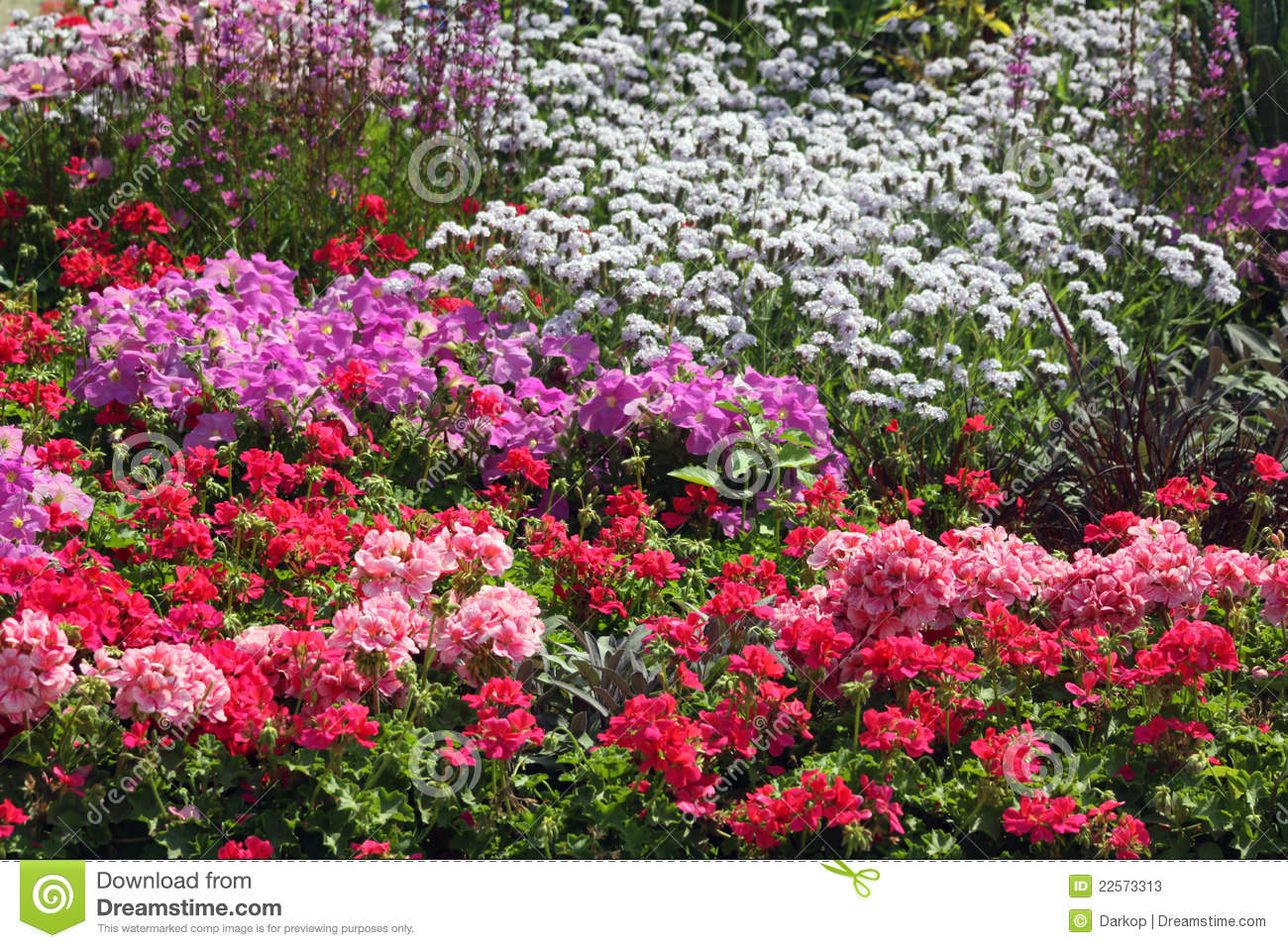 Flowers ornamental garden bed stock photos image 22573313 for Flowering landscape plants