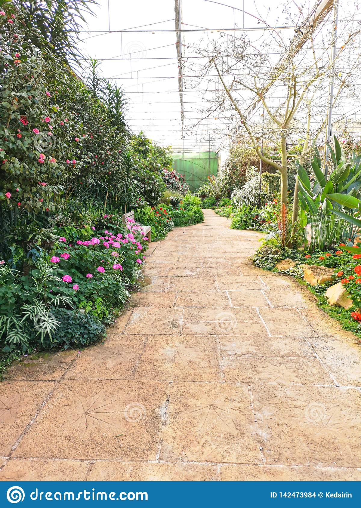 Beautiful Flowers And Plants In Garden Designs With Walkway Stock