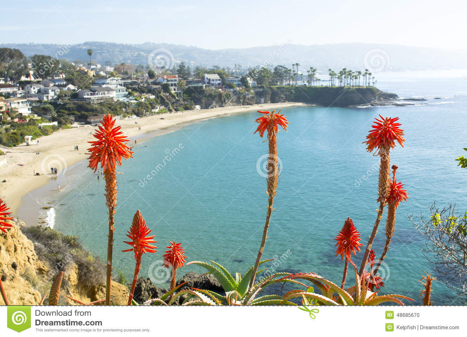 Flowers over beach cove