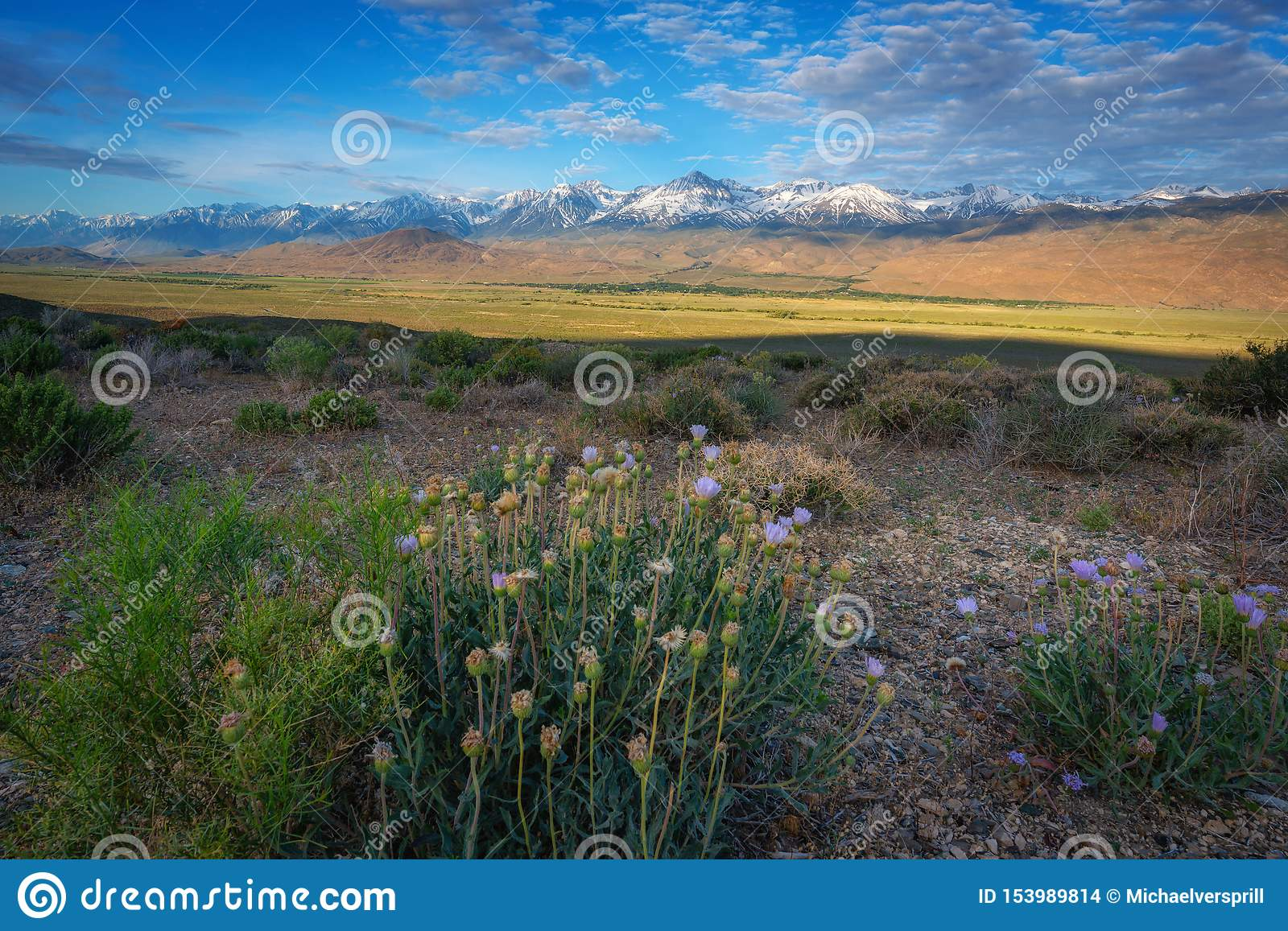 Flowers At Owens Valley In Big Pine California Stock Photo ...