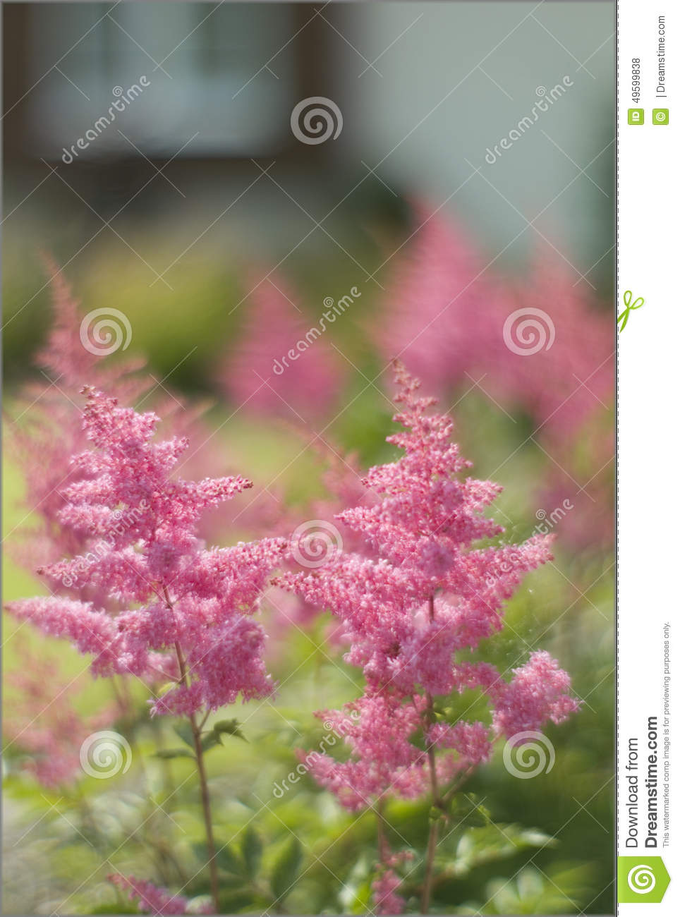 Plants for spring and summer - Flowers Plant In The Foreground With Garden Background
