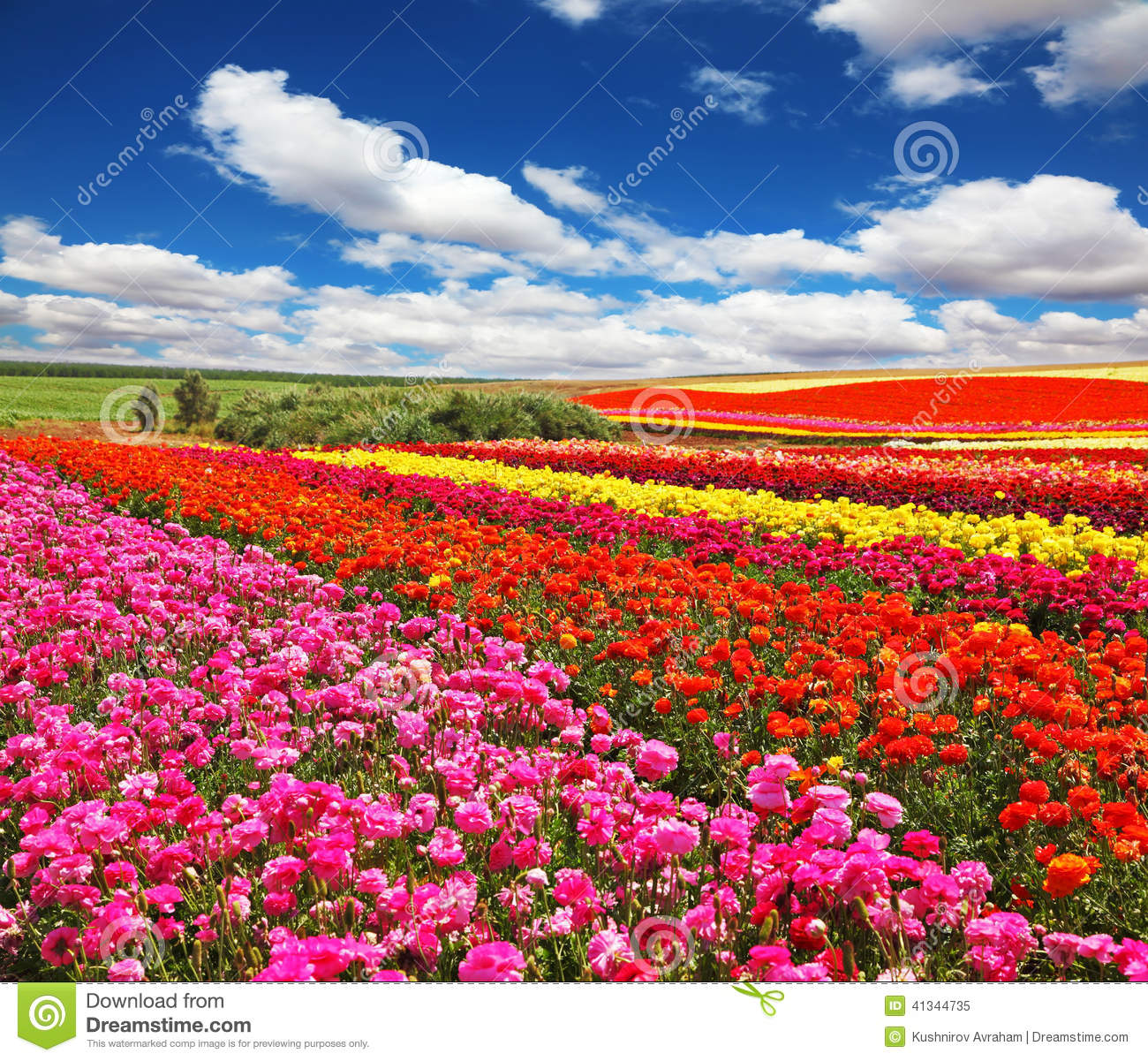 bright red flowers field - photo #48