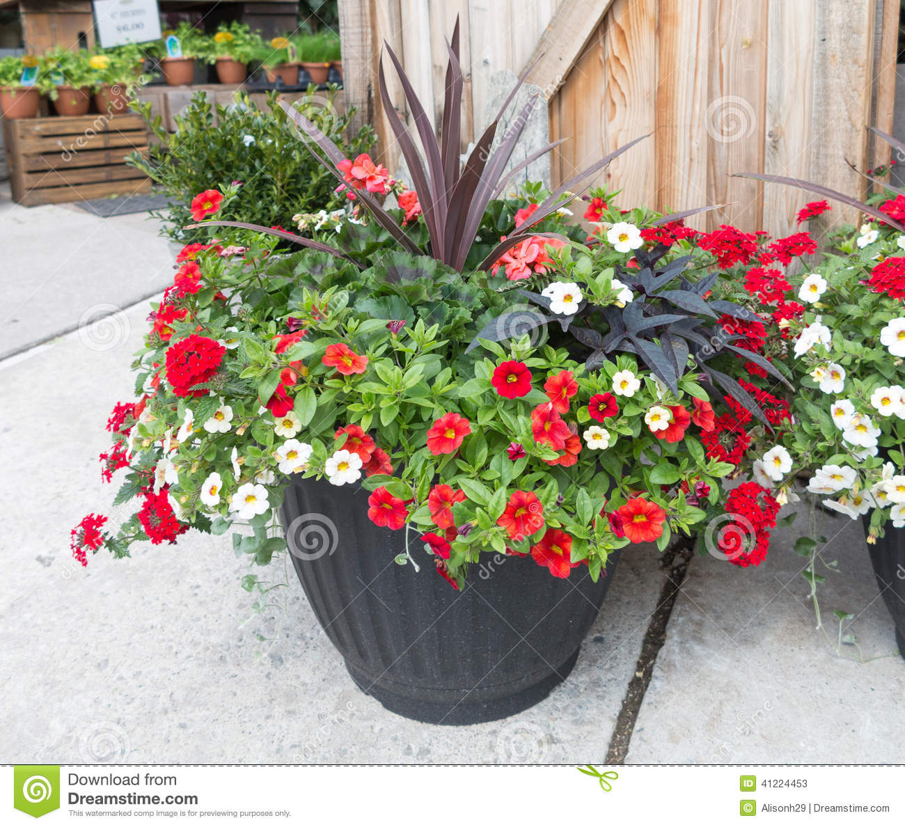 Flowers In Planter Stock Photo Image 41224453