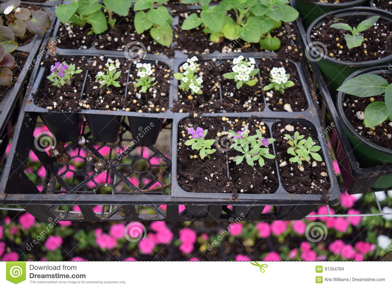 Flowers and plants in seed trays