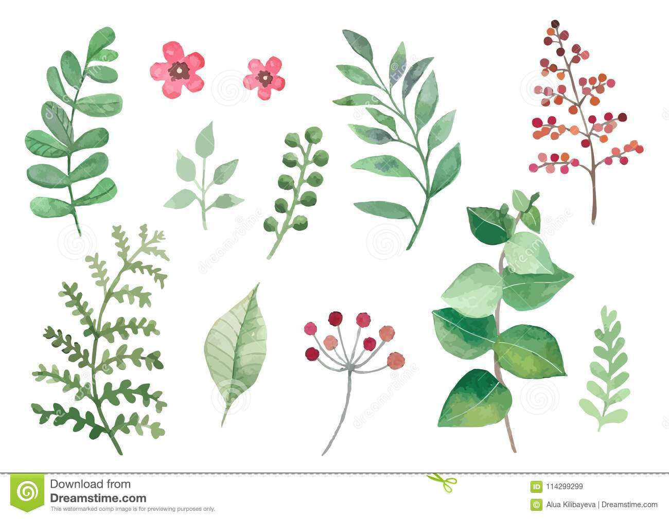 Flowers and plants set watercolour vectors leaves and branches