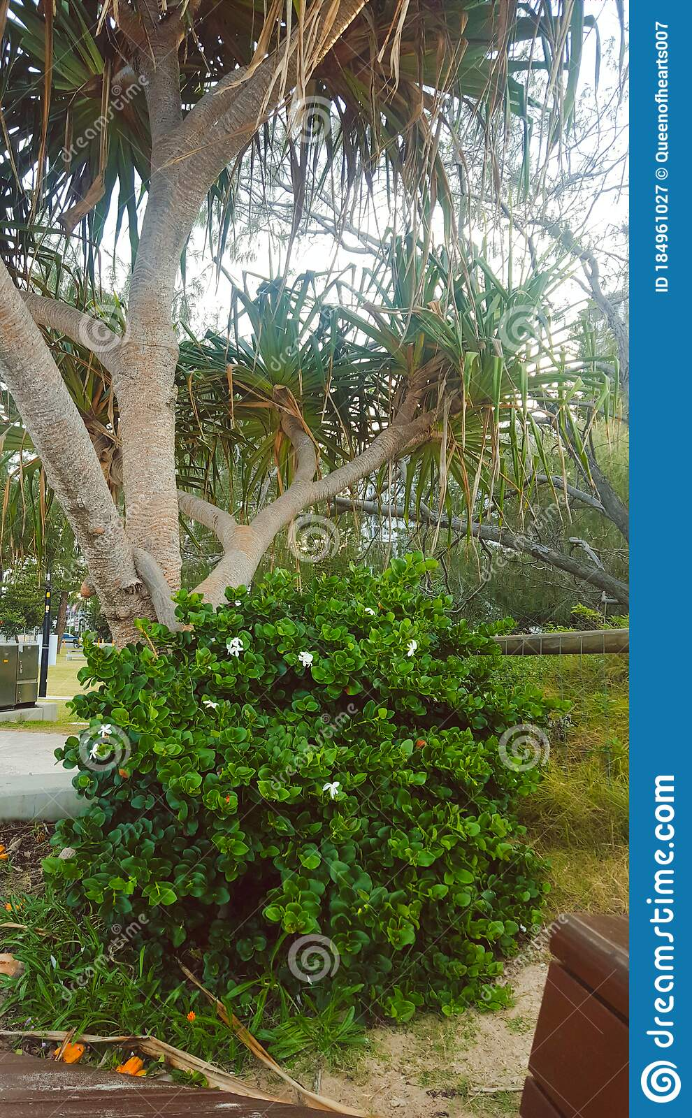Flowers And Plants Tropical Plants In A Lovely Park In Broadbeach Qld Australia Stock Image Image Of Park Tropical 184961027