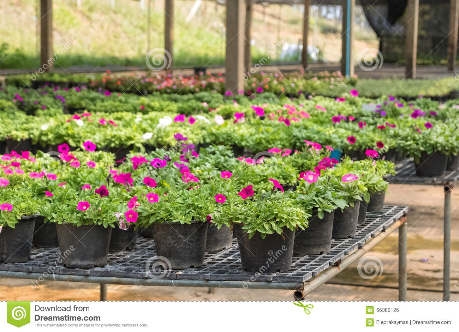 Plant Pots For Sale Delightful Designer Plant Pots Mr