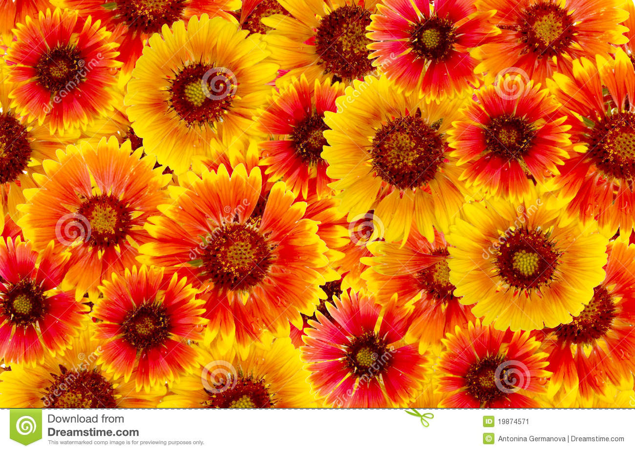 Flowers Are Red And Yellow Stock Image Image Of Texture 19874571