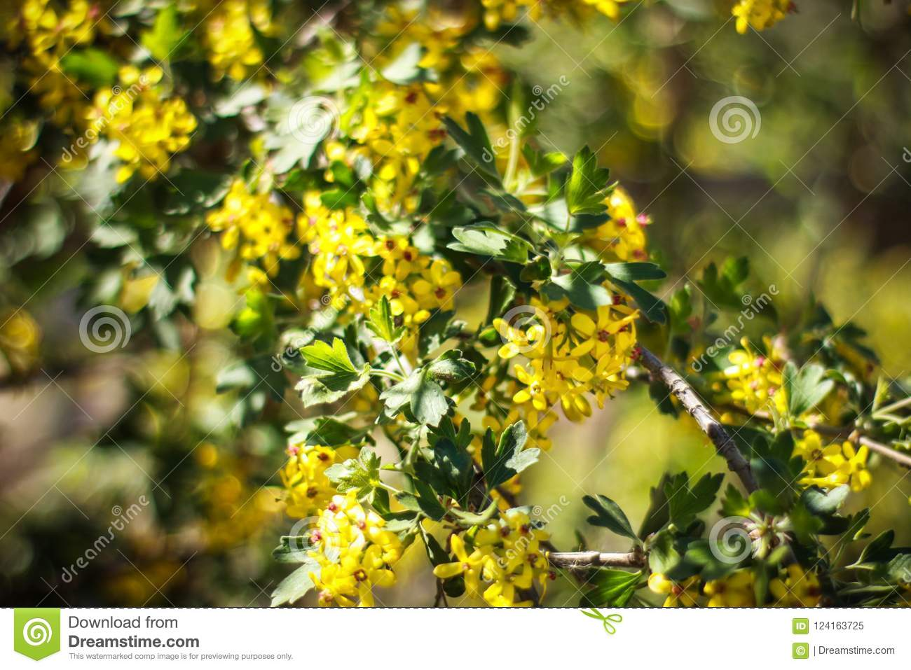 Beautiful yellow flowers on a sunny spring day stock image image download beautiful yellow flowers on a sunny spring day stock image image of meaning mightylinksfo