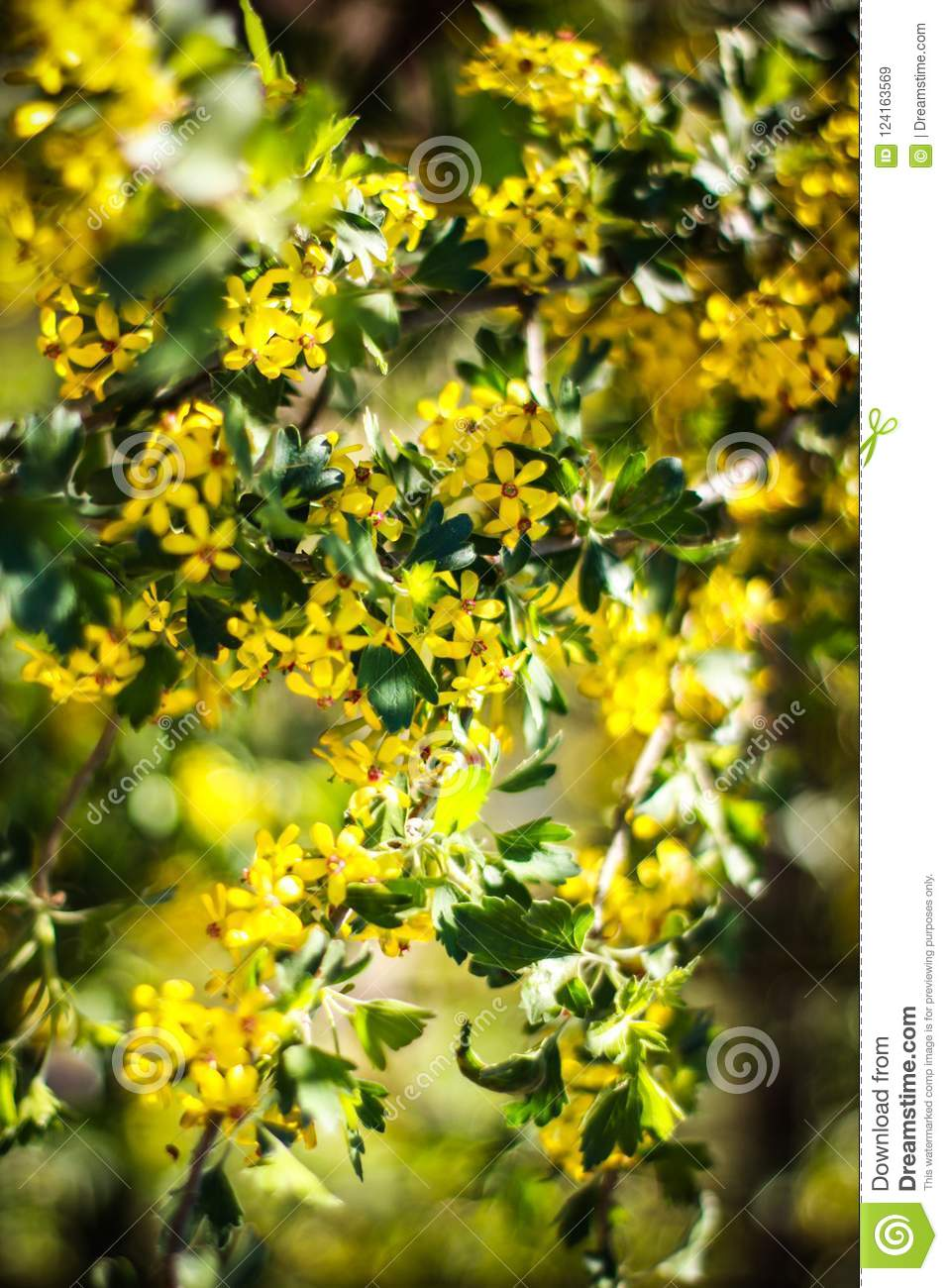 Beautiful Yellow Flowers On A Sunny Spring Day Stock Image Image