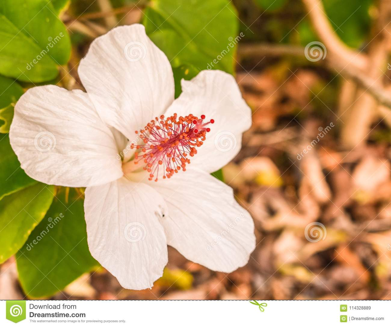 White Flowers Stock Image Image Of Foods Royal White 114328889