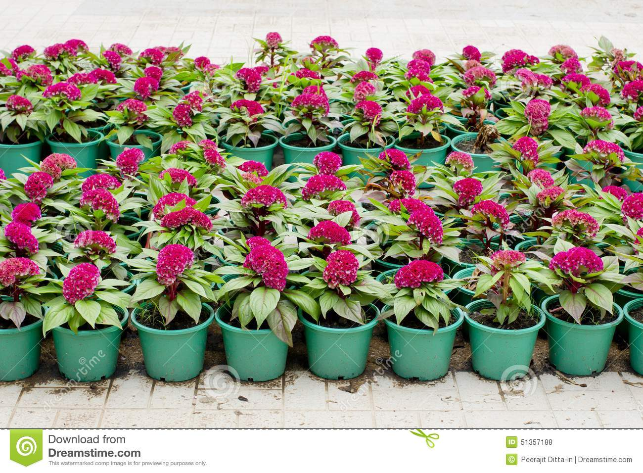Outdoor Flowers For Sale Part - 40: Royalty-Free Stock Photo. Download Flowers For Sale ...