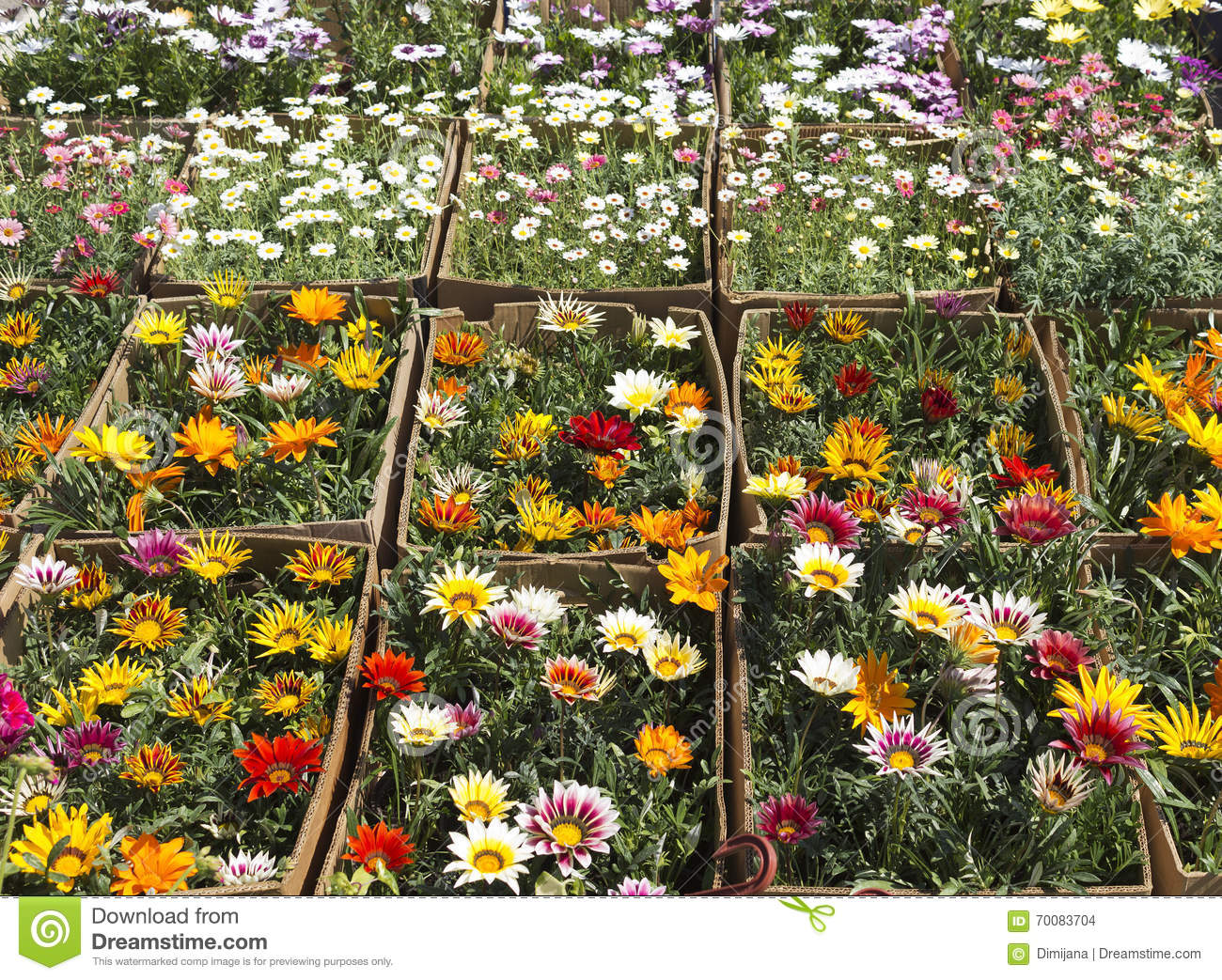 Flowers For Sale - Flower Market Stock Photo - Image of marketing ...