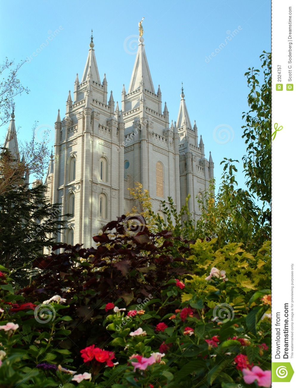 flowers and salt lake temple royalty free stock