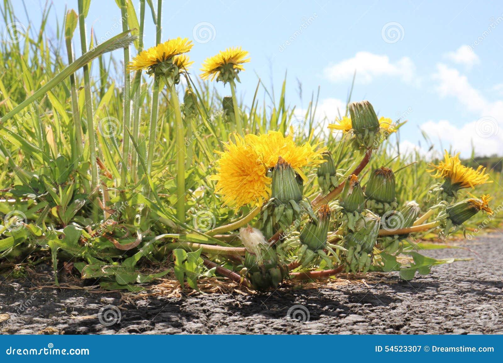 Flowers Scotland Weeds Sun Dying Stock Image Image Of Walking