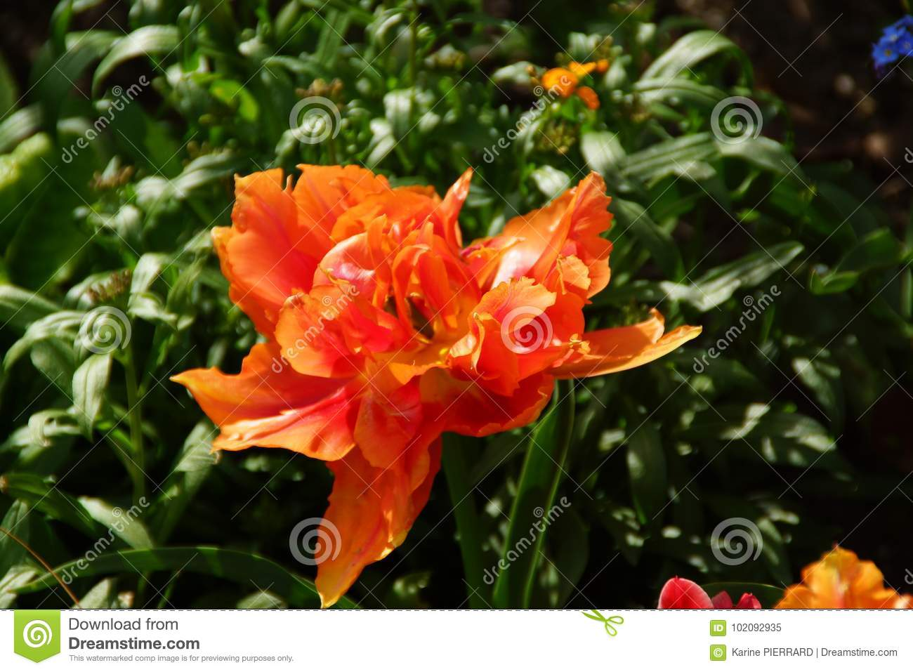 FLOWERS IN THE SENSATIONAL COLORS Stock Image - Image of carpel ...