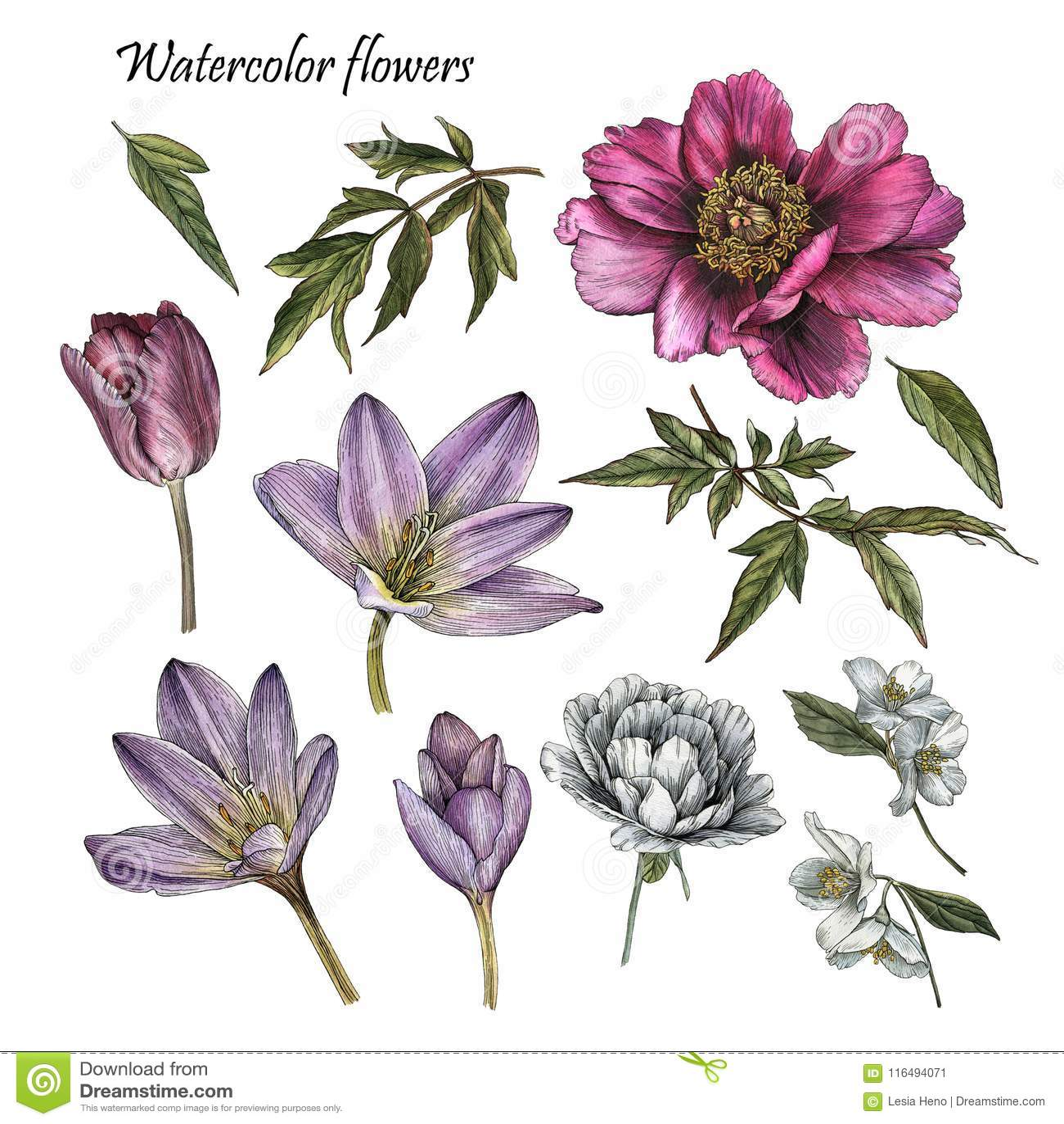 Flowers set of watercolor peony rose tulip jasmine flowers stock flowers set of watercolor purple peony rose tulip white jasmine and leaves izmirmasajfo