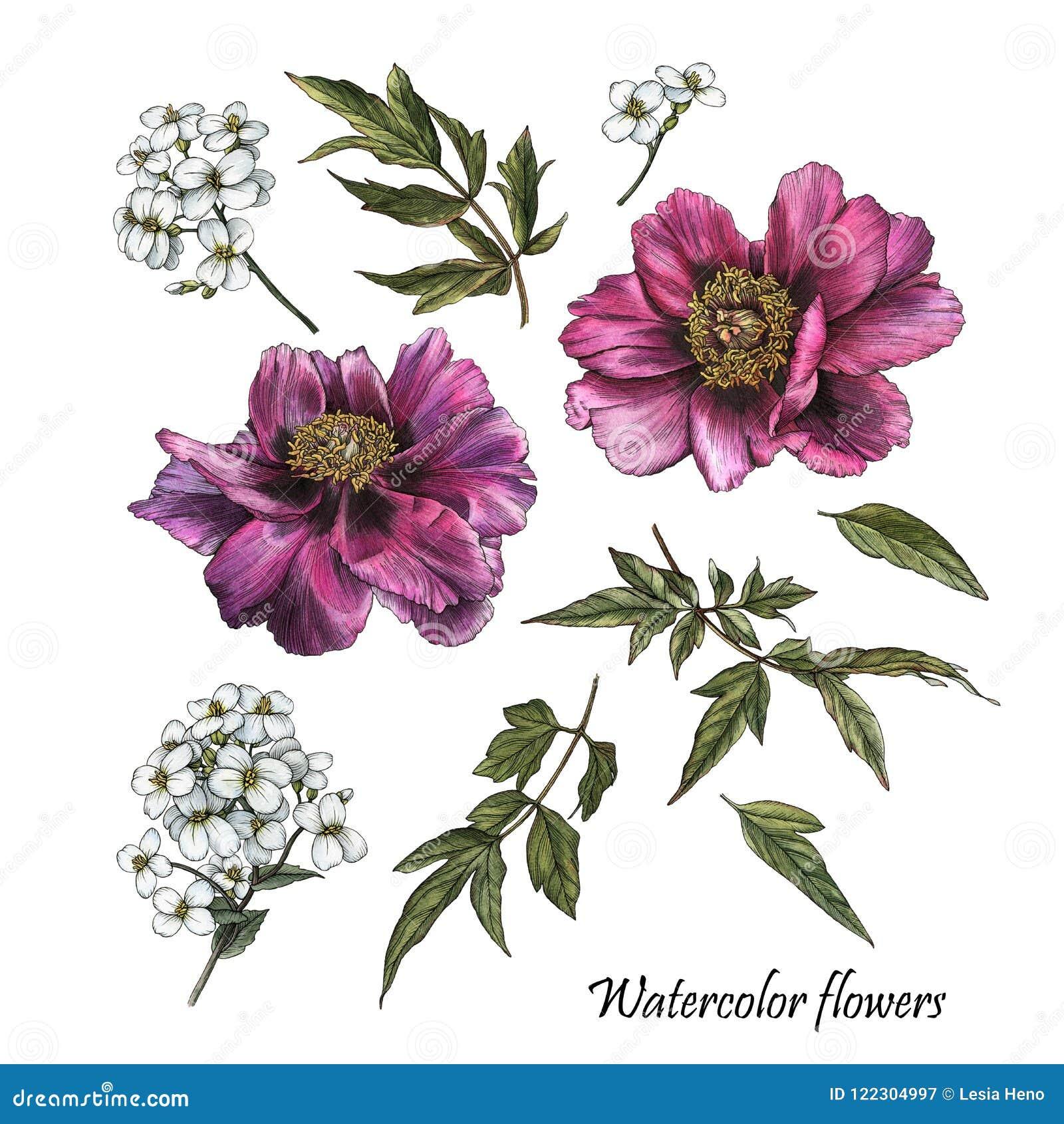 Flowers set of watercolor purple peonies and white jasmine stock flowers set of watercolor purple peonies and white jasmine izmirmasajfo