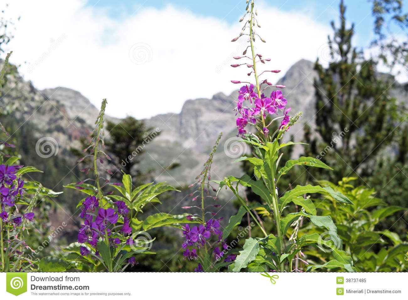 Flowers In Spanish Pyrenees Royalty Free Stock Image