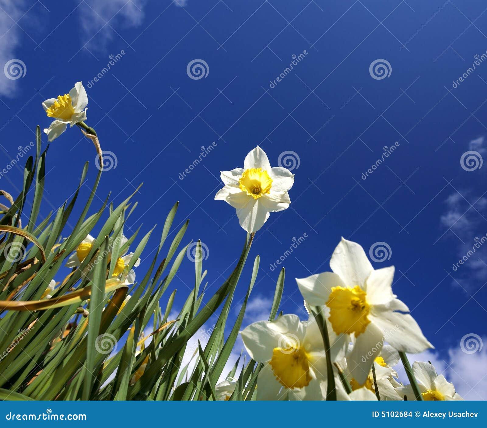 Flowers. spring.sky