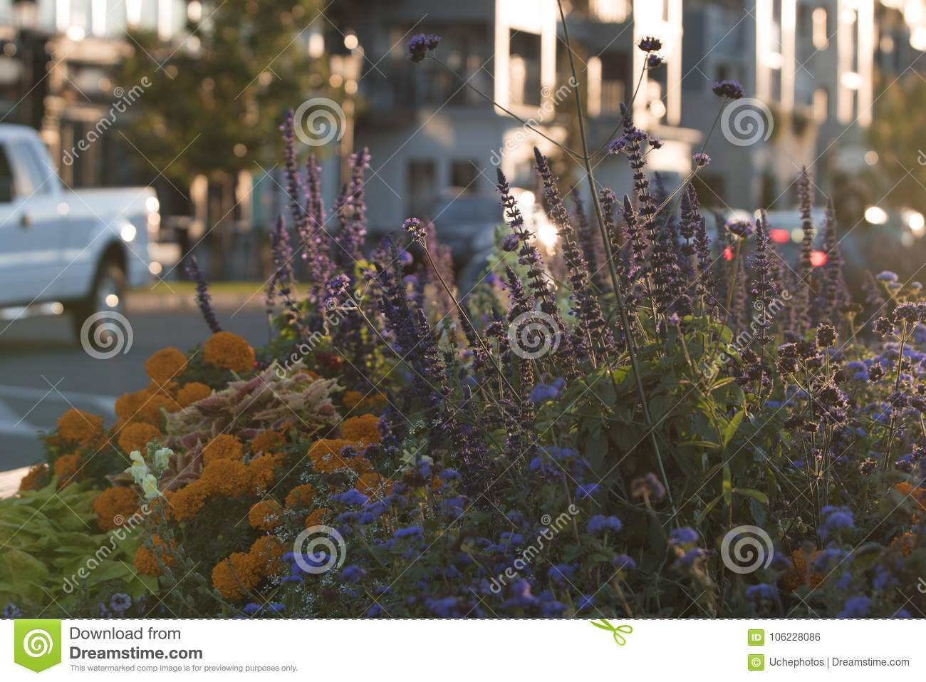 Flowers And Sunset Simply Beautiful Stock Photo Image Of Changing