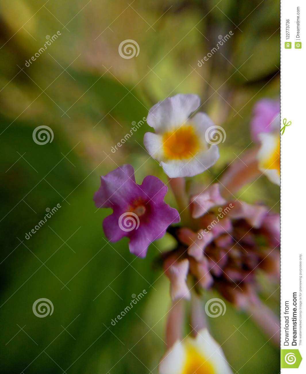 Flowers Stock Photo Image Of Lovely Beautiful Flowers 122773736