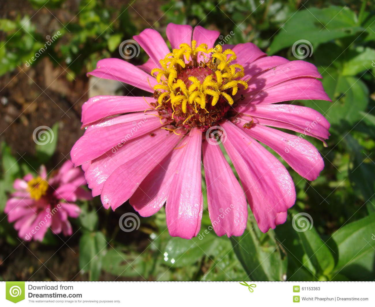 Flowers To Wait Beyond The End The Life Cycle Stock Image