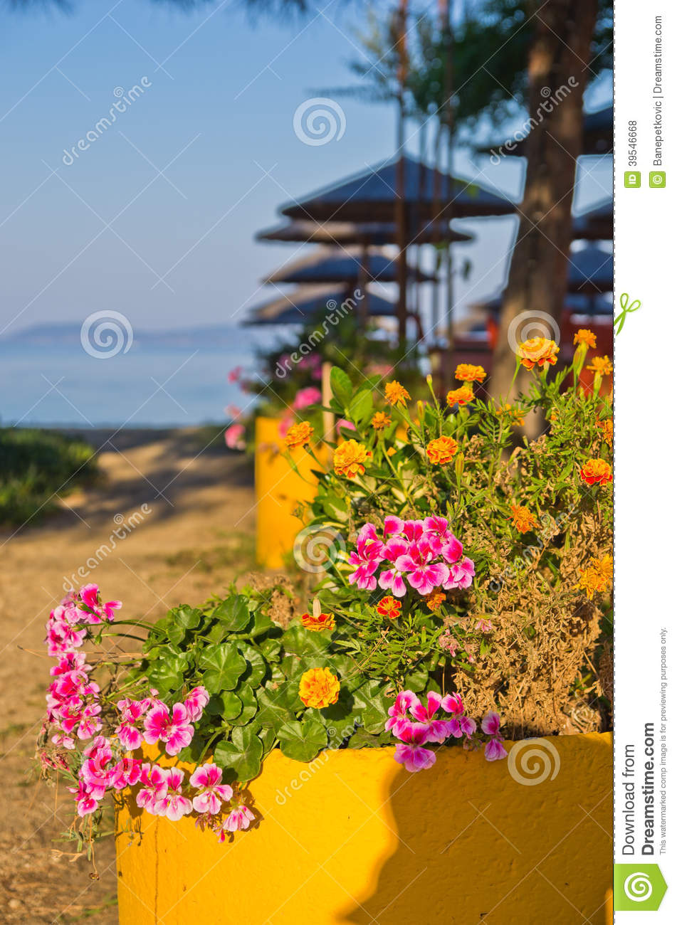 Flowers And Trees On A Path To The Beach At Morning Sunshine
