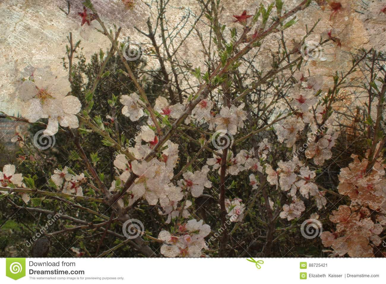 Tree in blossom, by Elize Kaisser art photographer