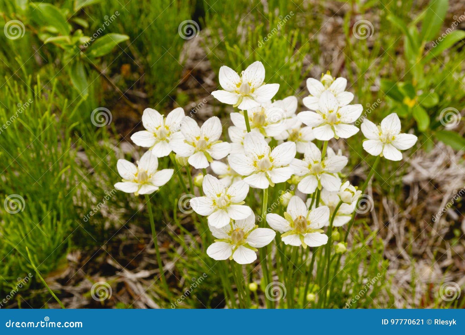 Flowers In The Tundra Stock Image Image Of Yukon White 97770621