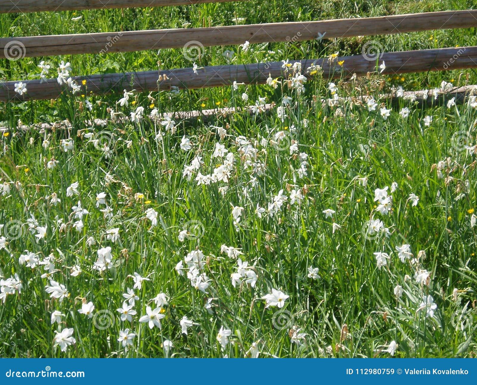 Flowers in Ukraine
