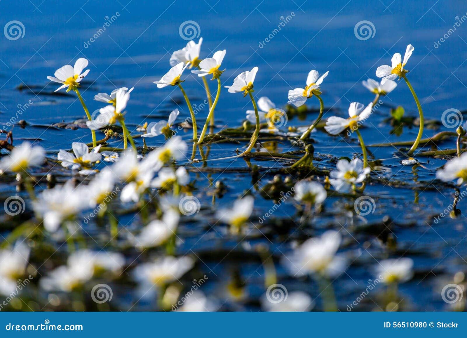 Underwater Growing Flowers | www.pixshark.com - Images ...